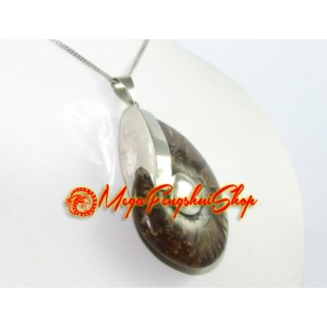 Ammonite Shell Pendant Necklace (L)