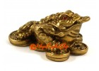 Brass Feng Shui Money Frog on Bed of Coins