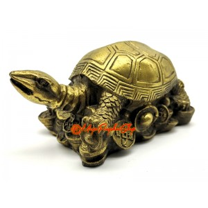 Brass Tortoise on Treasure