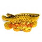 Golden Feng Shui Arowana for Wealth Luck