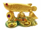 Golden Feng Shui Arowana on Treasure