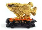 Golden Feng Shui Arowana to Attract Wealth